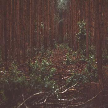 A rainy summer day in the woods july 2015 by Denny Bitte -