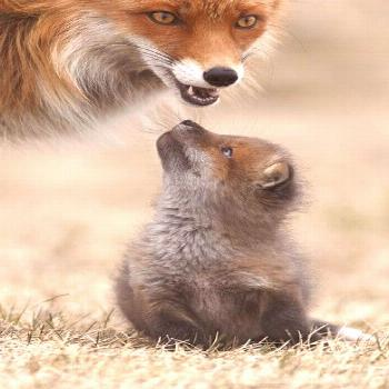 Society of German Animal Photographers: 1st place, mammals A pee with her boy, the little imp looks