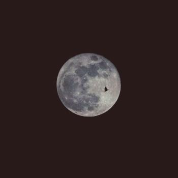 To the moon and never back - is all I wanted  @iCaptureTheHappiness 2020  . . . . . . . . . . . . .