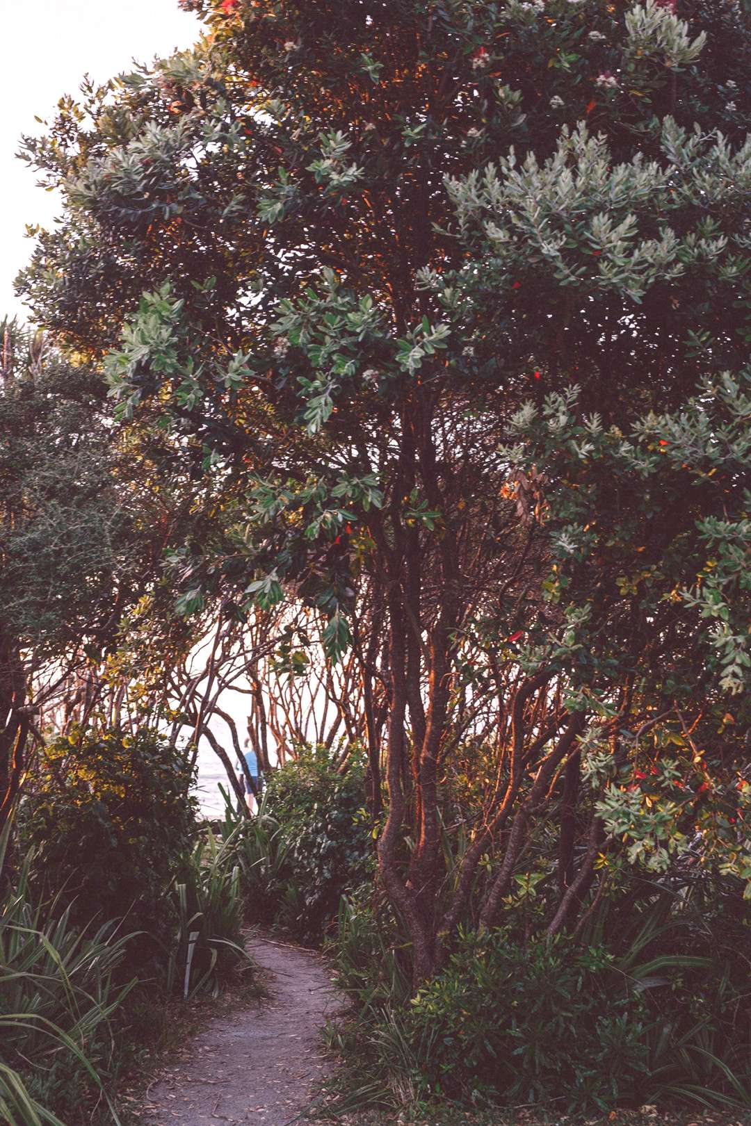 Enchanted walk to the beach…we slept only 100 m away from the oceanat punakaiki beach ... -