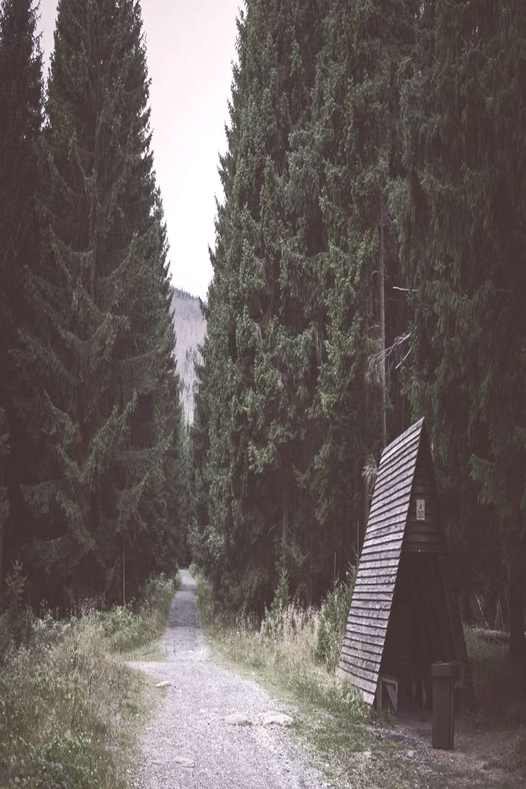 Hiking in the harzmountains, with spruces higher than houses. -