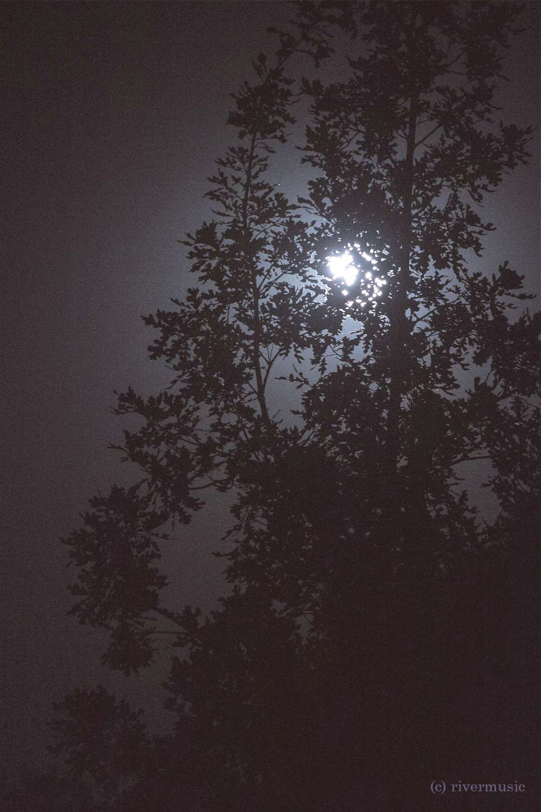 Moon and Oak, United riverwindphotography, August 2018 -
